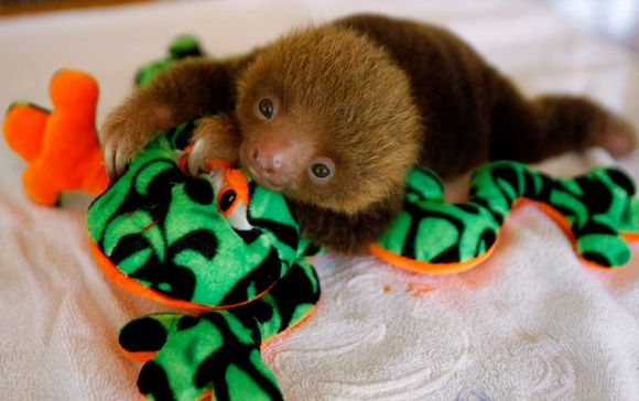 Sloth001.jpg